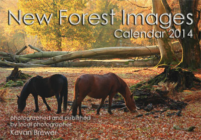 New Forest Images Calendar 2014