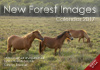 New Forest Images Calendar 2017