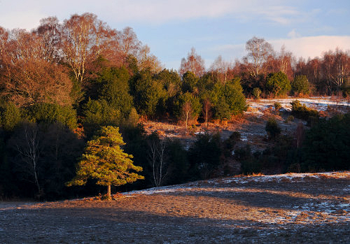 New Forest image: Acres Down