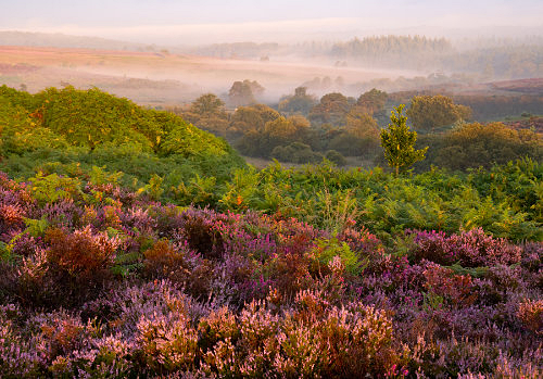 New Forest image: Akercombe Bottom