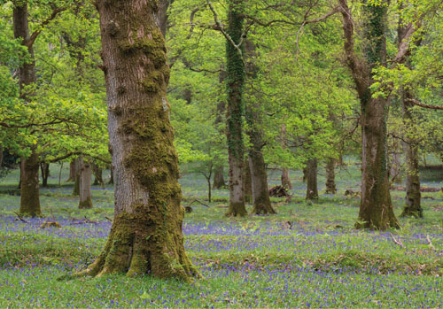 New Forest image: Amberwood Inclosure in Spring