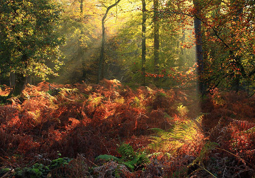 New Forest image: Autumn Colours in Puckpits Inclosure