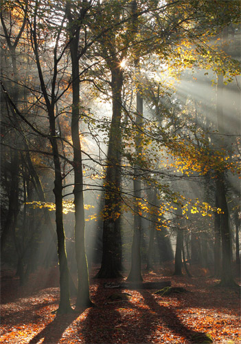 New Forest Landscapes : Autumn Sunburst at Rhinefield