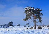 Beaulieu Heath in the Snow 