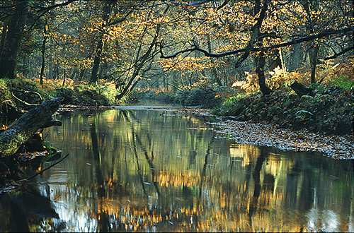 New Forest image: Blackwater Reflections