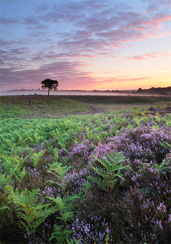 New Forest Landscapes : Bratley Plain