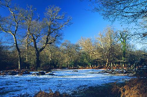 About The New Forest : Winter in Denny Wood