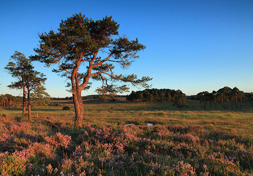 New Forest image: Evening Light at Strodgemoor Bottom