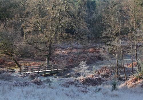 New Forest image: Footbridge over Highland Water