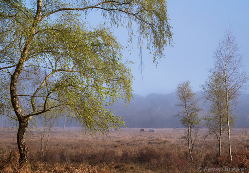 New Forest Landscapes : Halfpenny Green