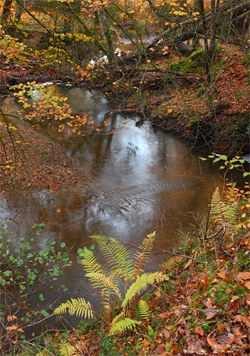 New Forest image: Highland Water in Autumn
