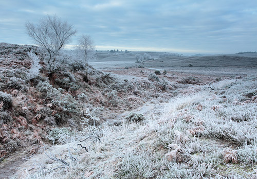 New Forest Landscapes : Hoar Frost at Ogden