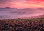 Late Summer Heathland Sunrise 