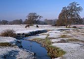 Ponies in the Frost at Longwater Lawn 