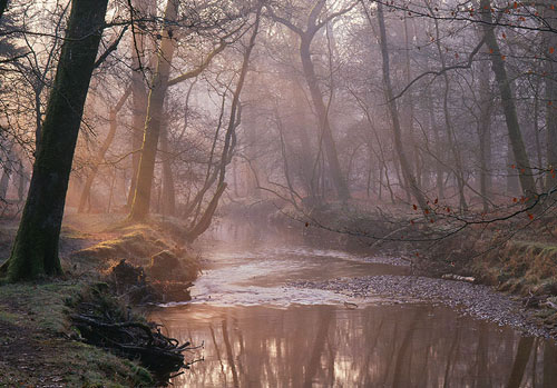 New Forest image: Morning Light over Black Water
