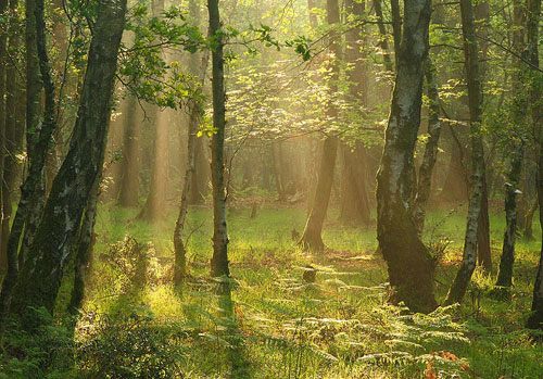 New Forest image: Summer Morning at Wood Crates