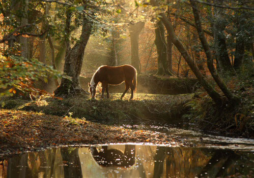 New Forest image: Grazing Pony by Highland Water