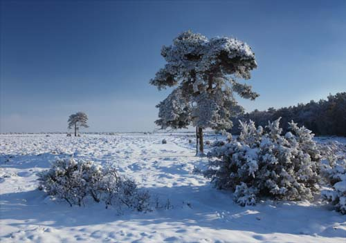 New Forest Landscapes : Snow on Beaulieu Heath