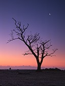 Stark Tree and Crescent Moon at Backley 