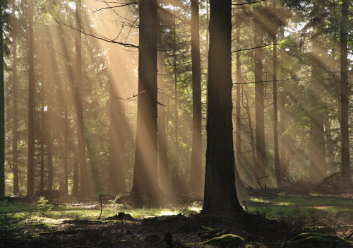 New Forest image: Sunrays in Bolderwood