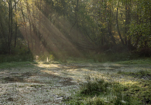 New Forest Landscapes : Sunrays at Mogshade Hill