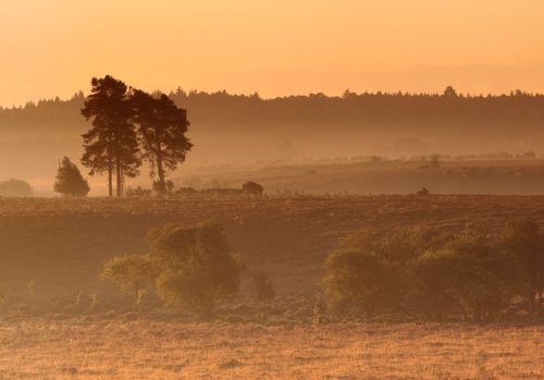 New Forest image: Sunrise over Buck Hill