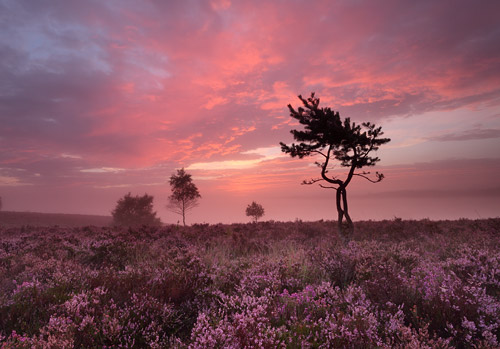 New Forest image: Sunrise at Ibsley Common
