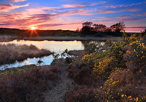 New Forest Landscapes : Sunset over Two Bridges Pond