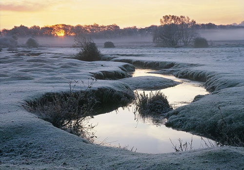 New Forest image: Winter Sunrise at Longwater Lawn