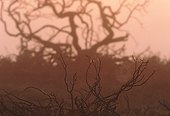 Cobweb on Burnt Gorse 