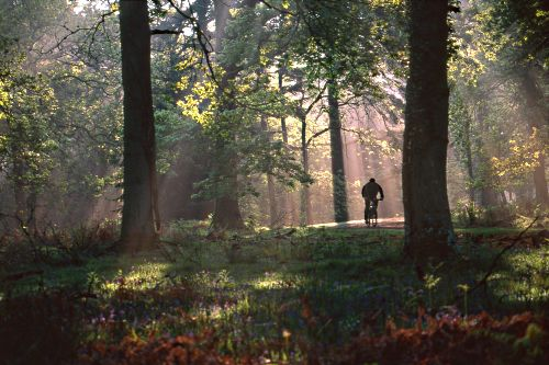 About The New Forest : Cyclist in Sloden Inclosure