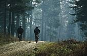 Cyclists on New Forest track 