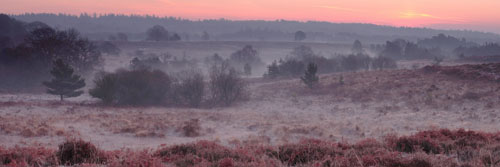 Panoramic Images of the New Forest : New Forest Valley at Dawn