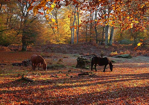 New Forest image: New Forest Ponies in Autumn Woodland