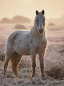 White Pony in the New Forest in Winter 